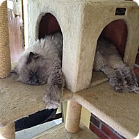 Adopt A Pet :: JR - Lancaster, MA