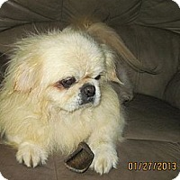 Adopt A Pet :: Winston - N. Fort Myers, FL