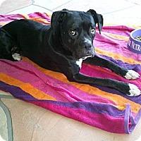 Adopt A Pet :: Baldwin - Scottsdale, AZ