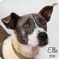 Adopt A Pet :: Ella - New Orleans, LA