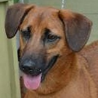 Shepherd (Unknown Type) Mix Dog for adoption in Jackson, Mississippi - Robin