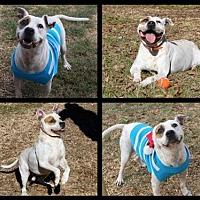 Adopt A Pet :: Tre - Columbus, MS