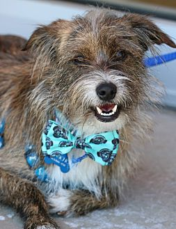 Terrier (Unknown Type, Small) Mix Dog for adoption in South El Monte, California - Poncho