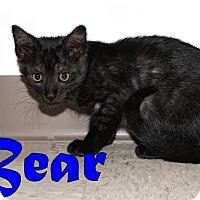 Adopt A Pet :: Bear - Trevose, PA