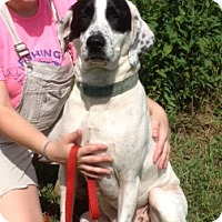 Adopt A Pet :: Rosie - Medora, IN