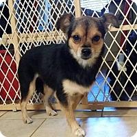 Adopt A Pet :: Peanut - Lawrenceville, GA