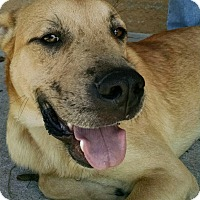 Adopt A Pet :: Anthony - Madisonville, LA