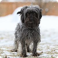 Adopt A Pet :: Spanx - Ile-Perrot, QC
