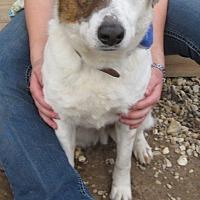 Adopt A Pet :: S1061    Checker - Bay Springs, MS