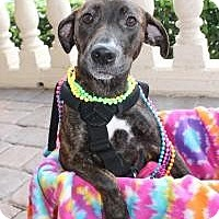 Adopt A Pet :: Hope**Handicap** - New Smyrna Beach, FL