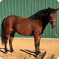 Adopt A Pet :: Gallo - Lancaster, CA