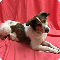 Adopt A Pet :: Dory - Livonia, MI
