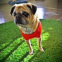 Adopt A Pet :: Bok Bok - Gardena, CA