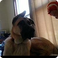 Adopt A Pet :: Tysons - Woodbridge, VA