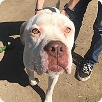 Adopt A Pet :: Wally - Visalia, CA