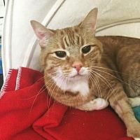 Adopt A Pet :: Simon Says - Vancouver, BC