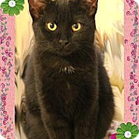 Adopt A Pet :: Nera - Richmond, VA