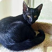 Adopt A Pet :: Quinn - Victor, NY