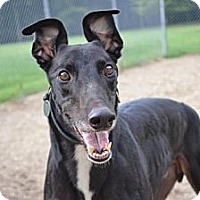 Adopt A Pet :: Fly (AMF Ready to Fly) - Chagrin Falls, OH