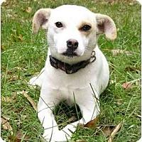 Adopt A Pet :: Meaghan - Mocksville, NC