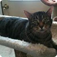 Adopt A Pet :: Barney - Ringwood, IL