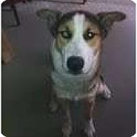 Adopt A Pet :: Scout - Medford, MA