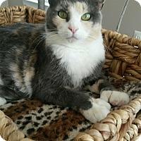 Adopt A Pet :: Callie - Reston, VA