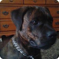 Adopt A Pet :: Dozer - Northumberland, ON