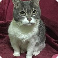 Adopt A Pet :: Angel - Sunderland, ON