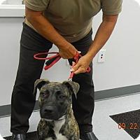 Adopt A Pet :: EMILY - Sandusky, OH