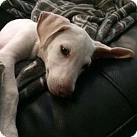 Adopt A Pet :: Boo 3191 - Toronto, ON