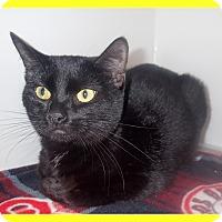 Adopt A Pet :: Petite - Newport, NC