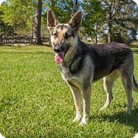 Adopt A Pet :: Lady 2 - Baton Rouge, LA
