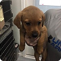 Adopt A Pet :: Stacy - Troy, IL