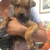 Adopt A Pet :: Morgan - Santa Ana, CA