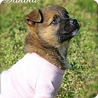Adopt A Pet :: Dakota - Albany, NY