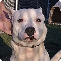 Adopt A Pet :: Jason - white settlment, TX