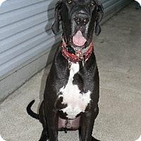 Adopt A Pet :: John Wayne - Hanover, MD