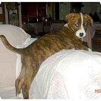 Adopt A Pet :: Spike - Orlando, FL