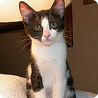 Adopt A Pet :: Fergie - Dover, OH
