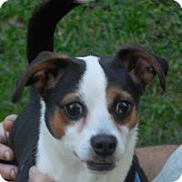 Adopt A Pet :: Oliver - Ormond Beach, FL