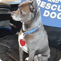 Adopt A Pet :: Benji - Prole, IA