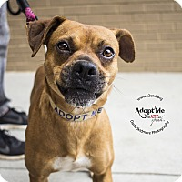Adopt A Pet :: Taylor Swift - Mooresville, NC