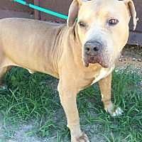 Adopt A Pet :: Bruno - Demopolis, AL