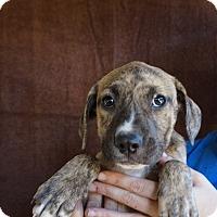 Adopt A Pet :: Jill - Oviedo, FL