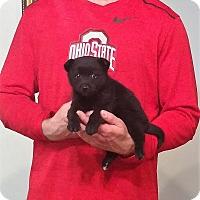 Adopt A Pet :: Andre - New Philadelphia, OH