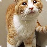 Adopt A Pet :: Jason - Channahon, IL