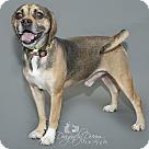 Adopt A Pet :: Chester