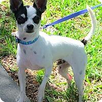 Adopt A Pet :: Chico - North Richland Hills, TX