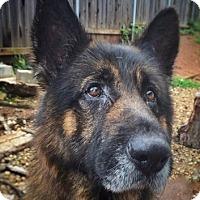 Adopt A Pet :: Luca - Sacramento, CA